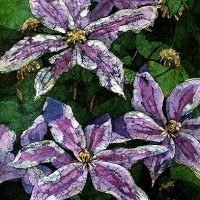 Watercolor batik painting - Clematis