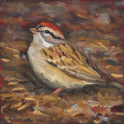 Chipping Sparrow - small daily oil painting