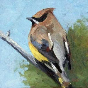 Cedar Waxwing - small daily oil painting