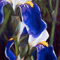 Purple Irises - oil painting by Krista Hasson fine art