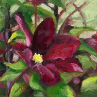 Clematis - small daily oil painting