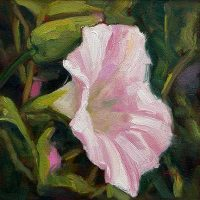 Morning Glory - small daily oil by Krista Hasson