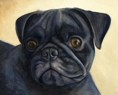 Watercolor painting Black pug dog Krista Hasson
