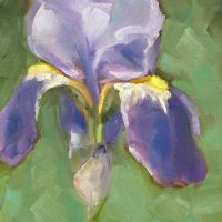 Iris daily oil painting by Krista Hasson