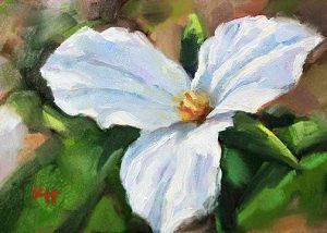 White Trillium oil painting – Day 7 of the 30 day daily painting challenge