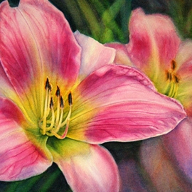 hot Pink day lilies watercolor krista hasson